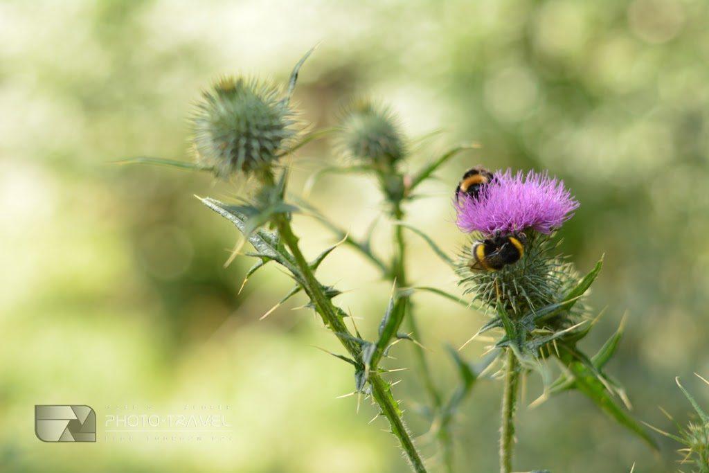 Roślinność i przyroda Gór Sowich. Flora i fauna Gór Sowich