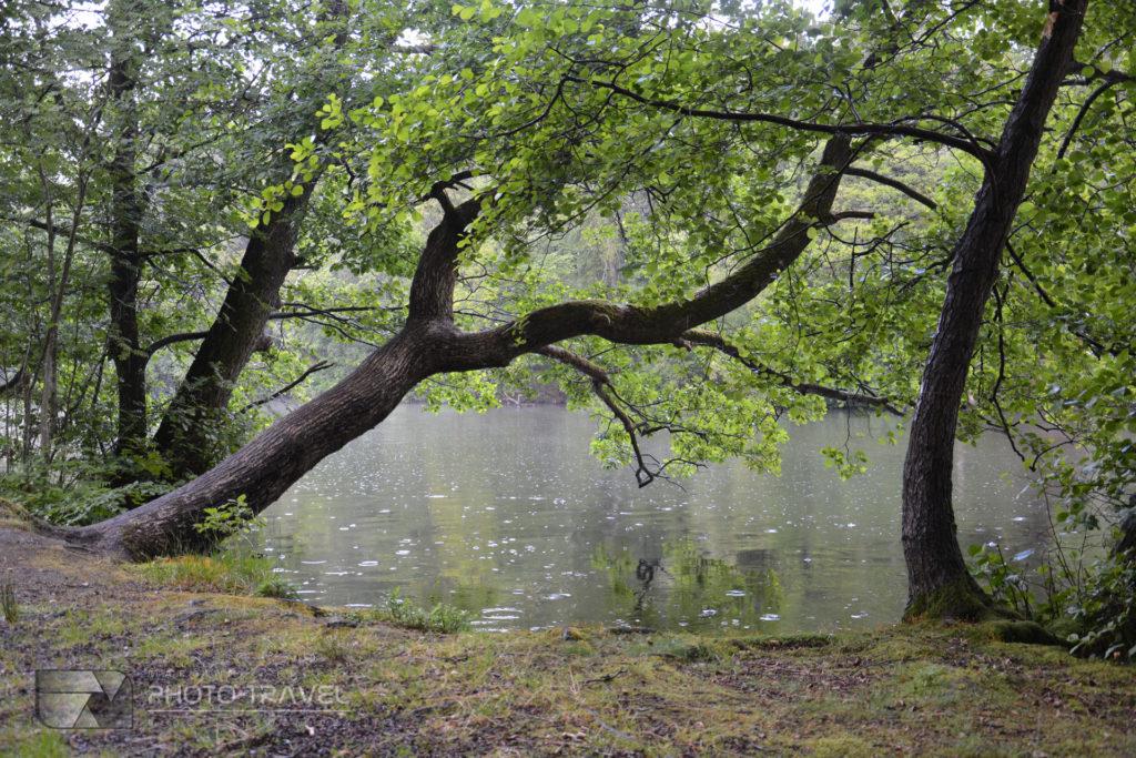 Jutlandia - region Silkeborga
