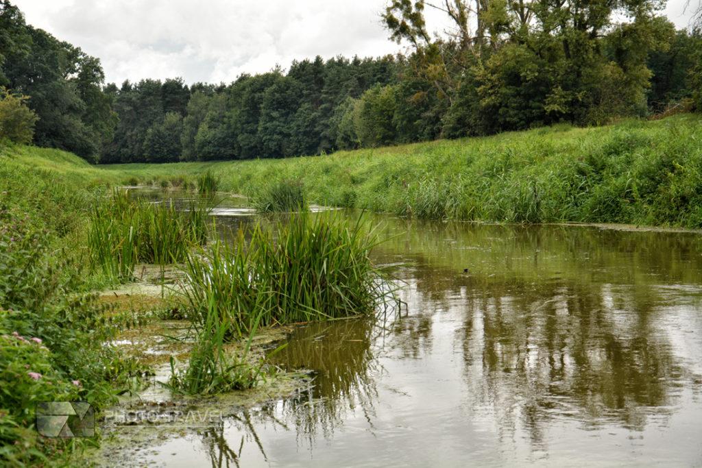 Rzeka Milicz i Dni Karpia
