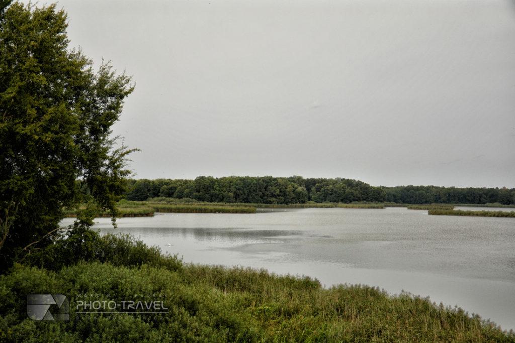 Dolina Baryczy i Stawy Milickie - gdzie obserwować ptaki?