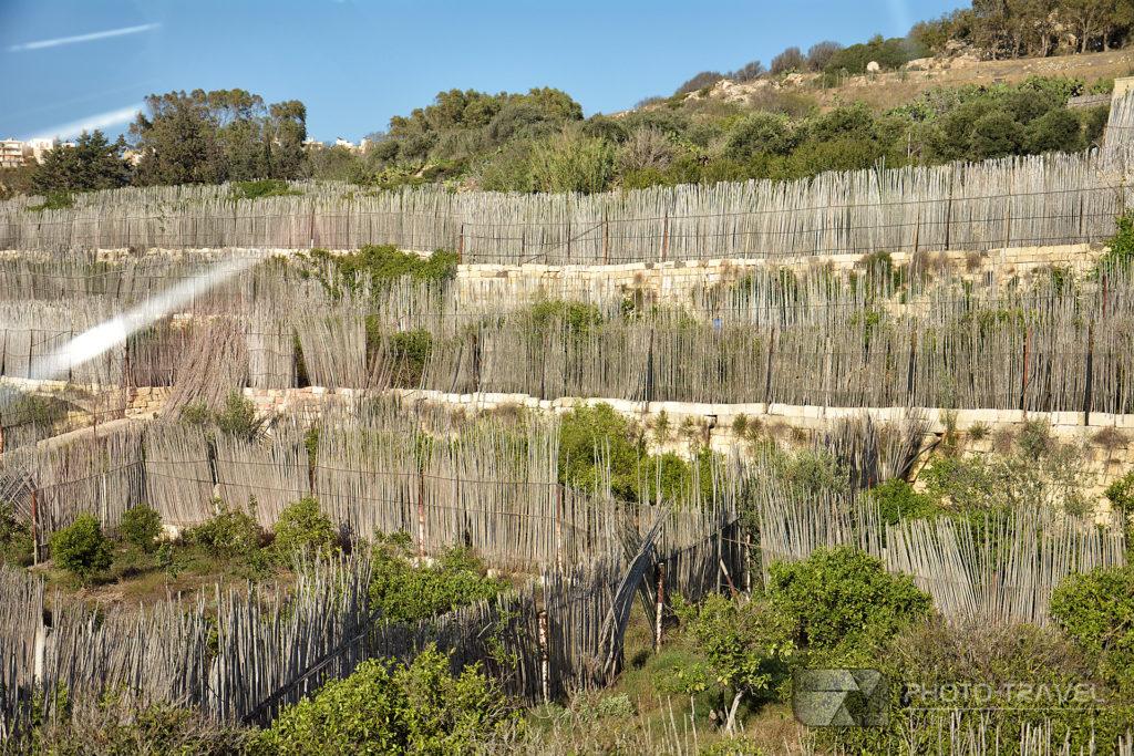 Plantacje na wyspie Gozo