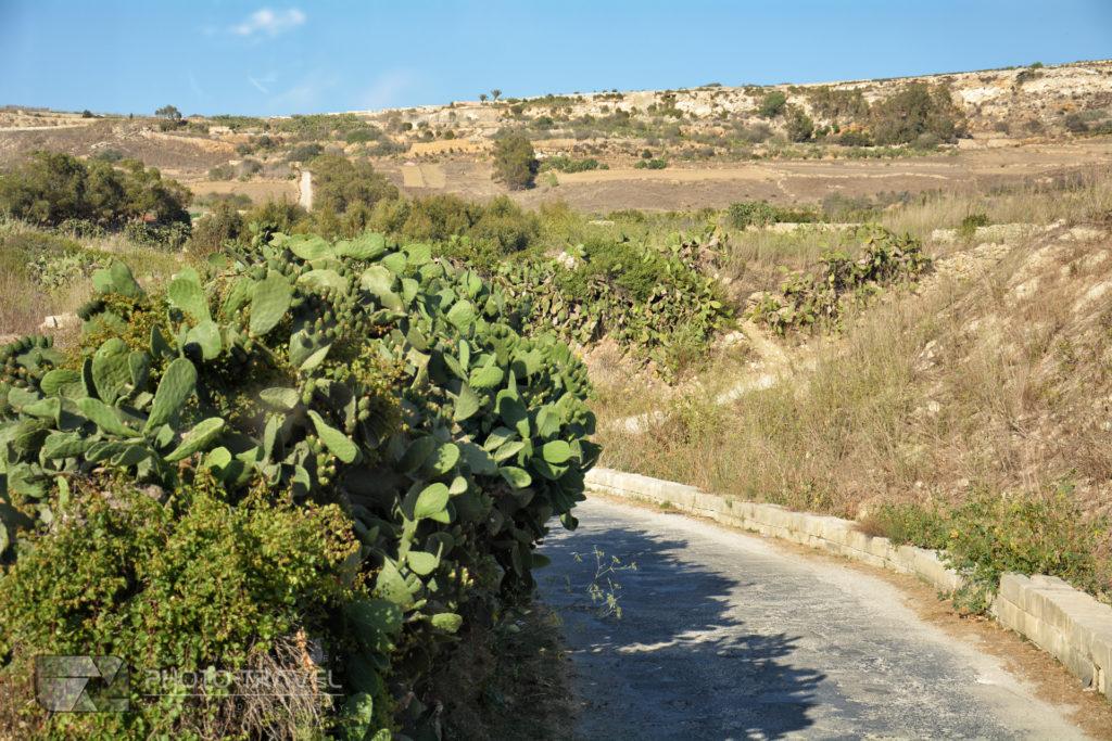 Roślinność na wyspie Gozo