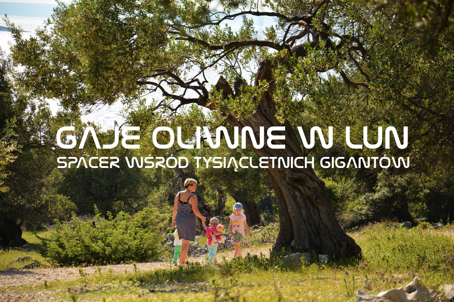 Gaje oliwne w Lun