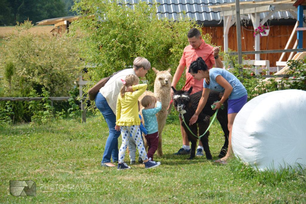 Marta Hajłasz i Artur Spodniewski właściciele Alpakowej Kotliny pokazują dzieciom alpaki