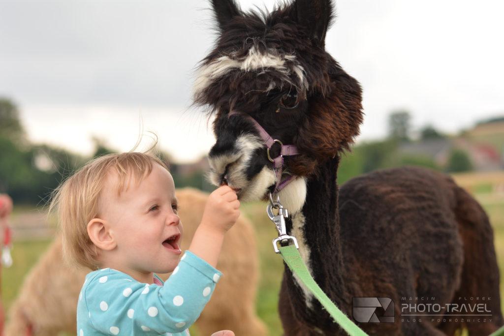 Dzieci a alpaki