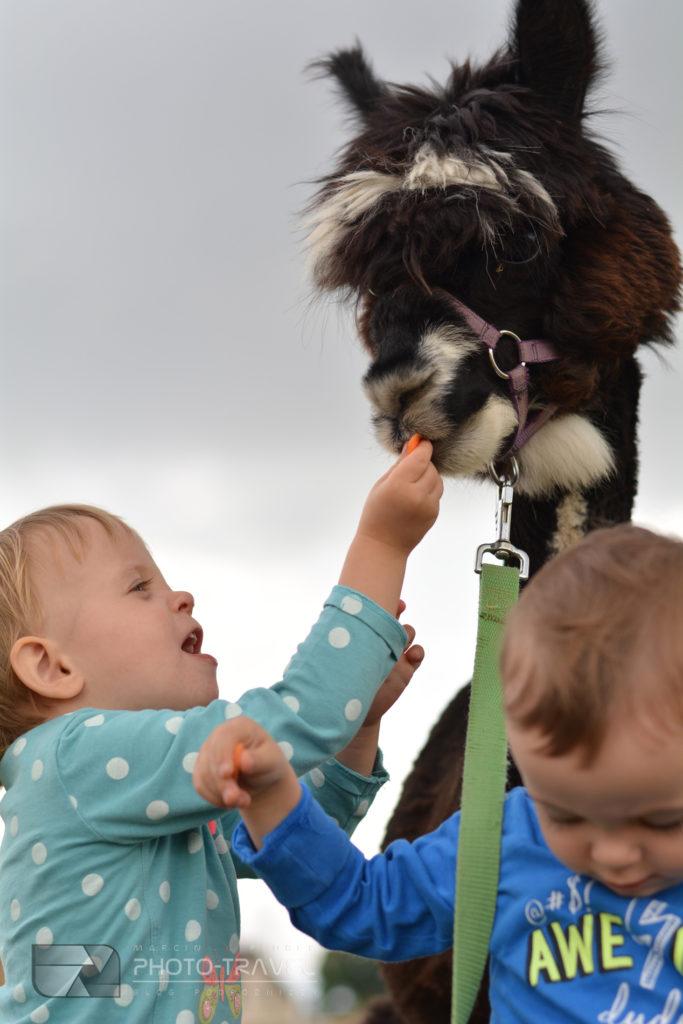 Z dziećmi w Alpakowej Kotlinie