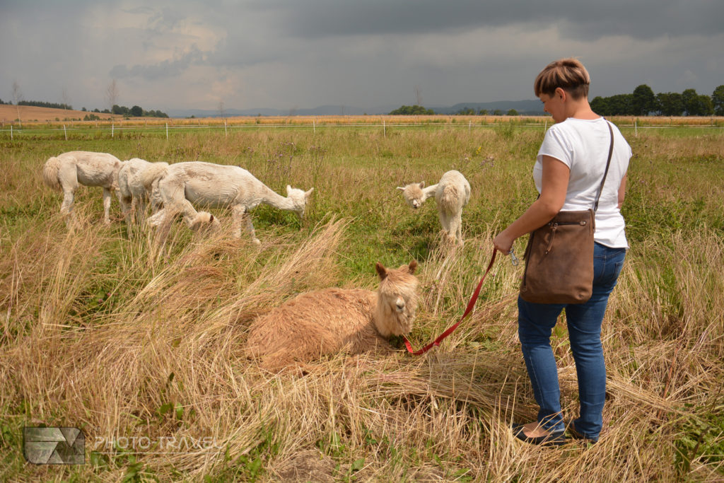 Alpakowa Kotlina - atrakcje Kotliny Kłodzkiej