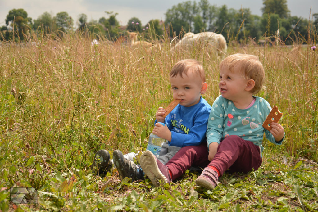 Dzieci w Alpakowej Kotlinie