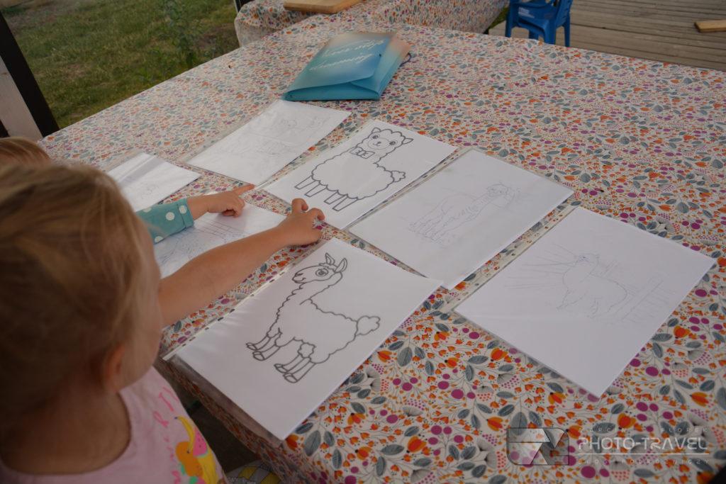Kolorowanki w Alpakowej Kotlinie - atrakcje dla dzieci w okolicach Kłodzka
