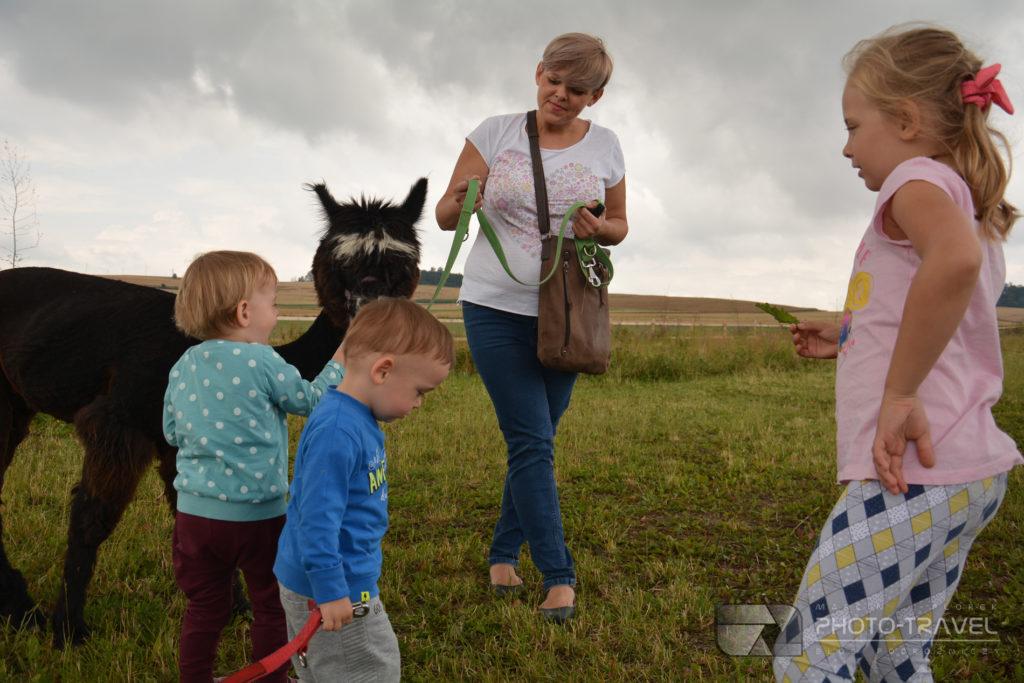 Wycieczka z dziećmi do Alpakowej Kotliny