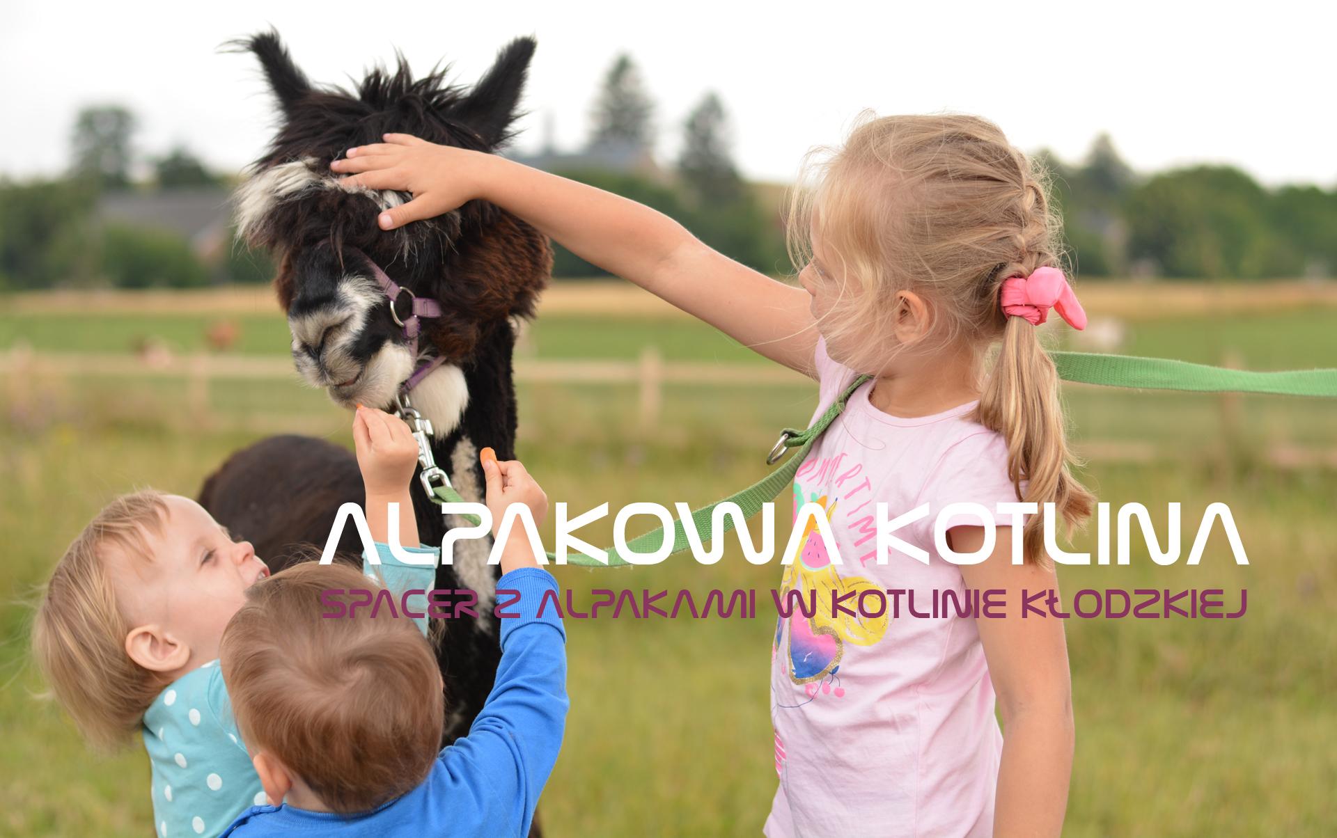Alpakowa Kotlina – Spacer z alpakami w Kotlinie Kłodzkiej