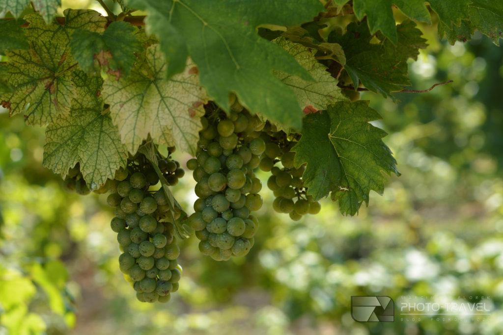 Winnice Badacsony - węgierskie wina
