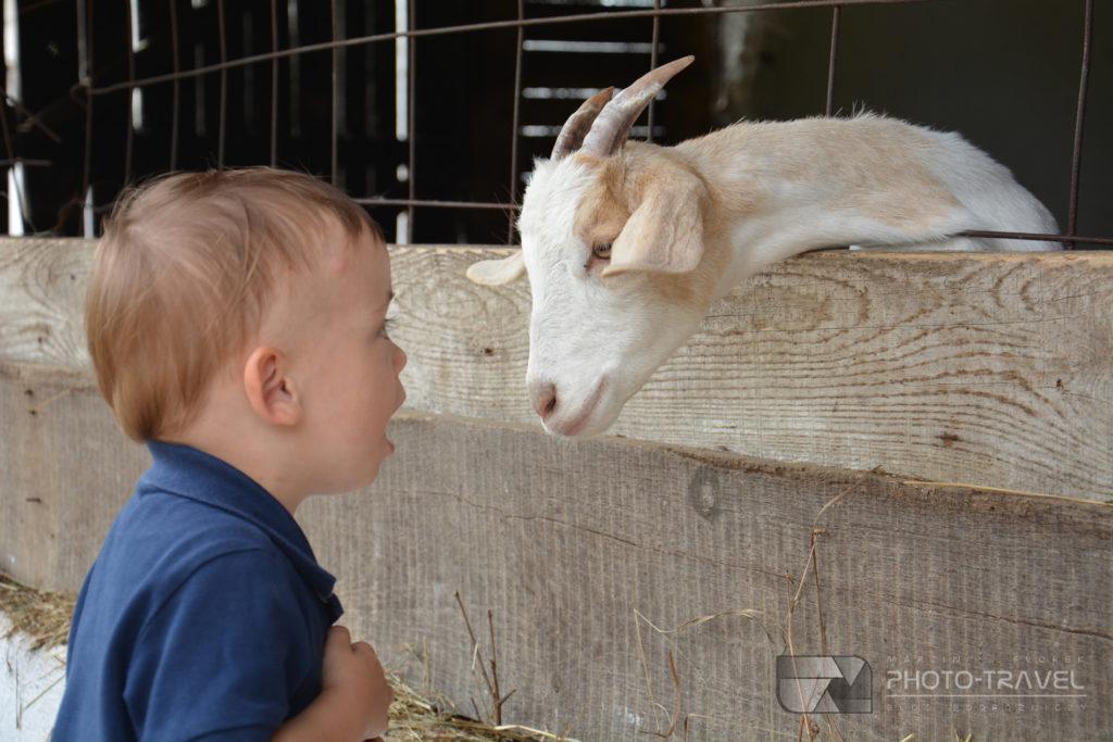 Mini ZOO Fenyvespuszta  atrakcje dla dzieci nad Balatonem