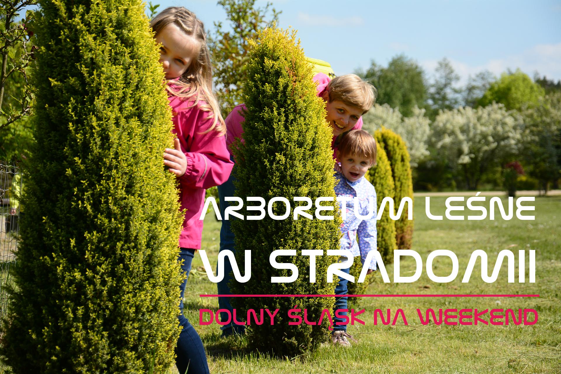 Arboretum leśne w Stradomii | Dolny Śląsk na weekend
