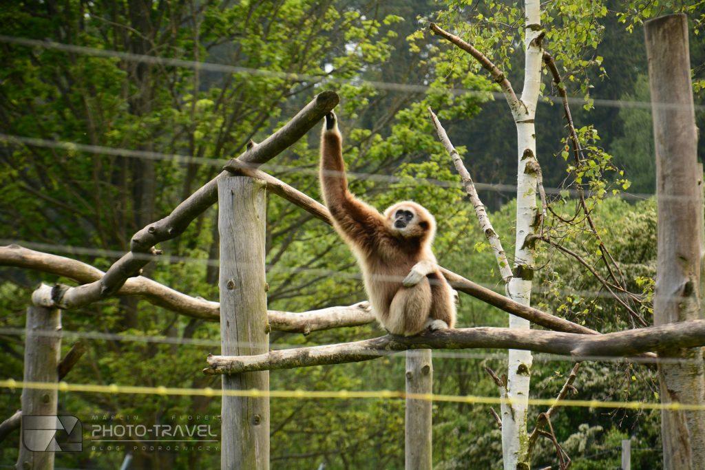 Małpy i lemury w ZOO Łączna