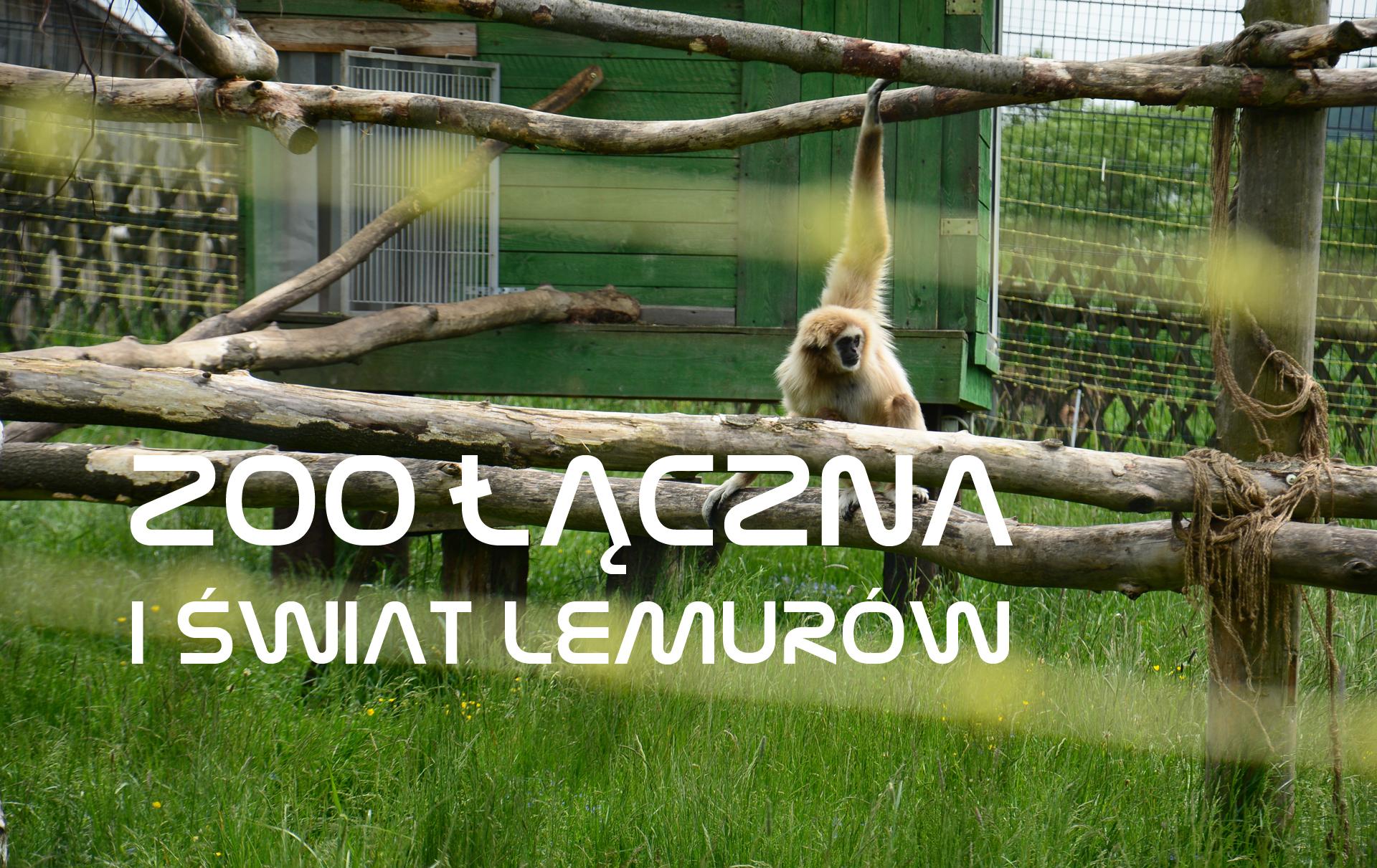 ZOO Łączna i Świat Lemurów – drugie zoo na Dolnym Śląsku