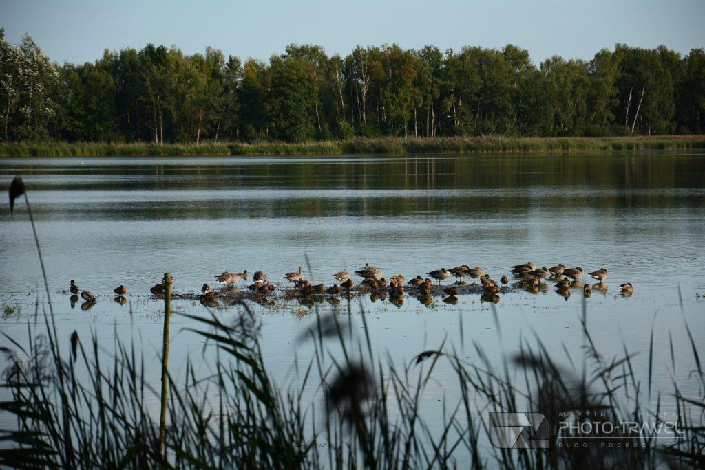 Obserwacja ptaków na Stawach Milickich
