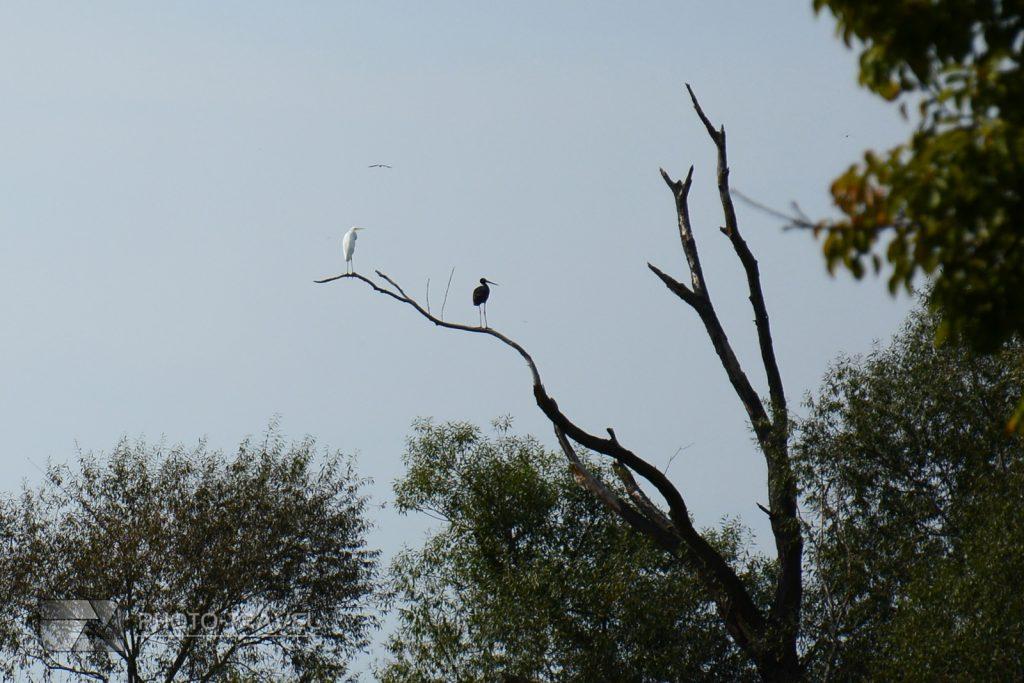 Bidrwatching - Obserwacja ptaków na Stawach Milickich