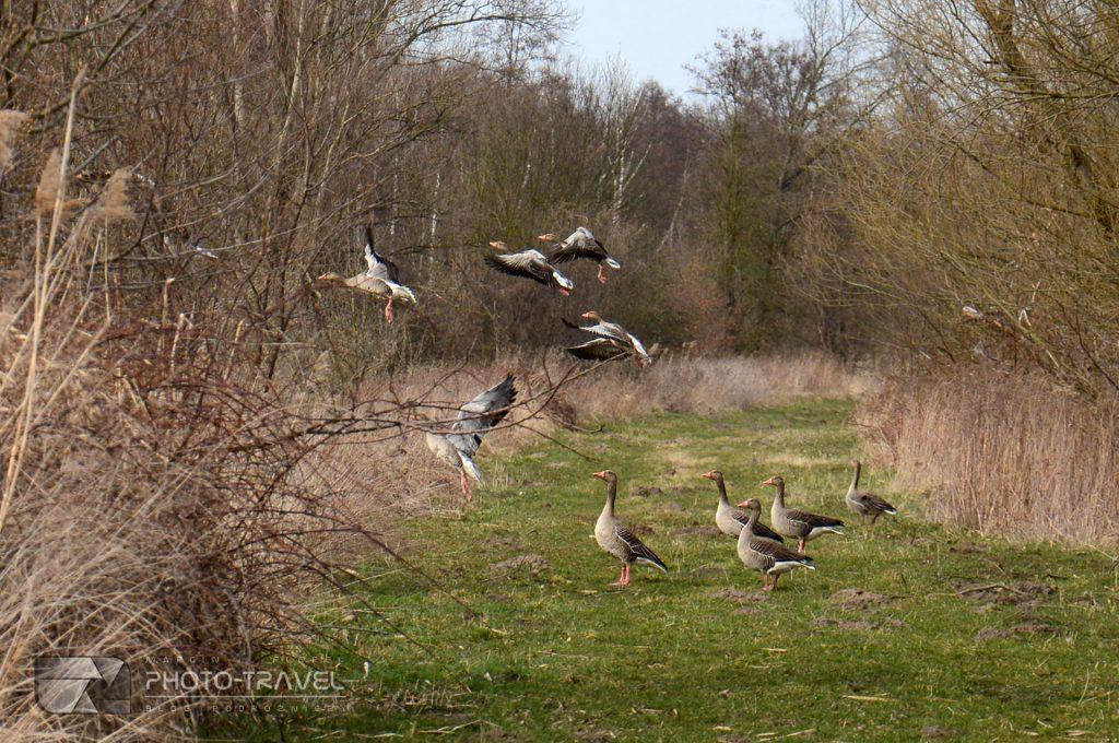 Stawy Milickie - wieże, czatownie i punkty widokowe - obserwacja ptaków