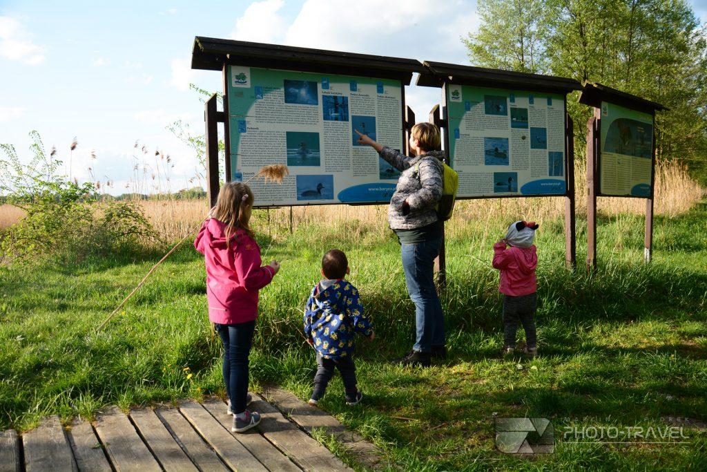 Stawy Milickie - wieże, czatownie i punkty widokowe - czatownia na Stawie Polnym