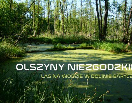 Olszyny Niezgodzkie – las na wodzie w Dolinie Baryczy